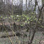 Bilder aus dem Wald