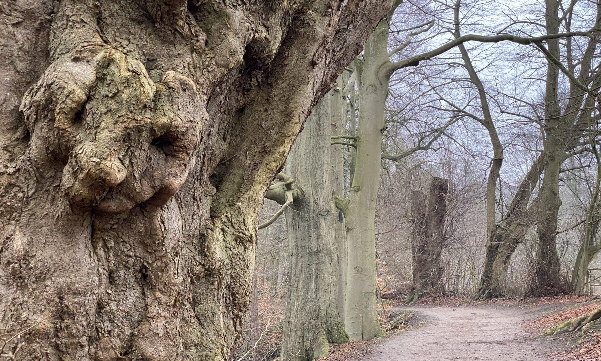 Hamburg - die Stadt im Wald